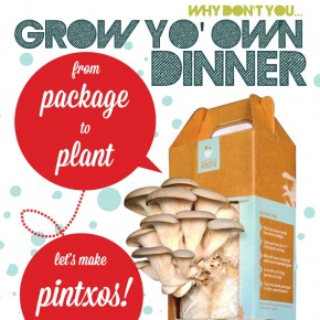 Mushroom Growing Kit: Oyster Mushroom Pintxos & Fungi Inspired Design For Your Kitchen