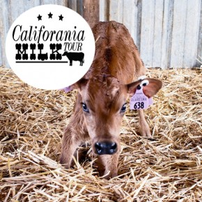 Exploring Real California Milk - #CAMilkTour
